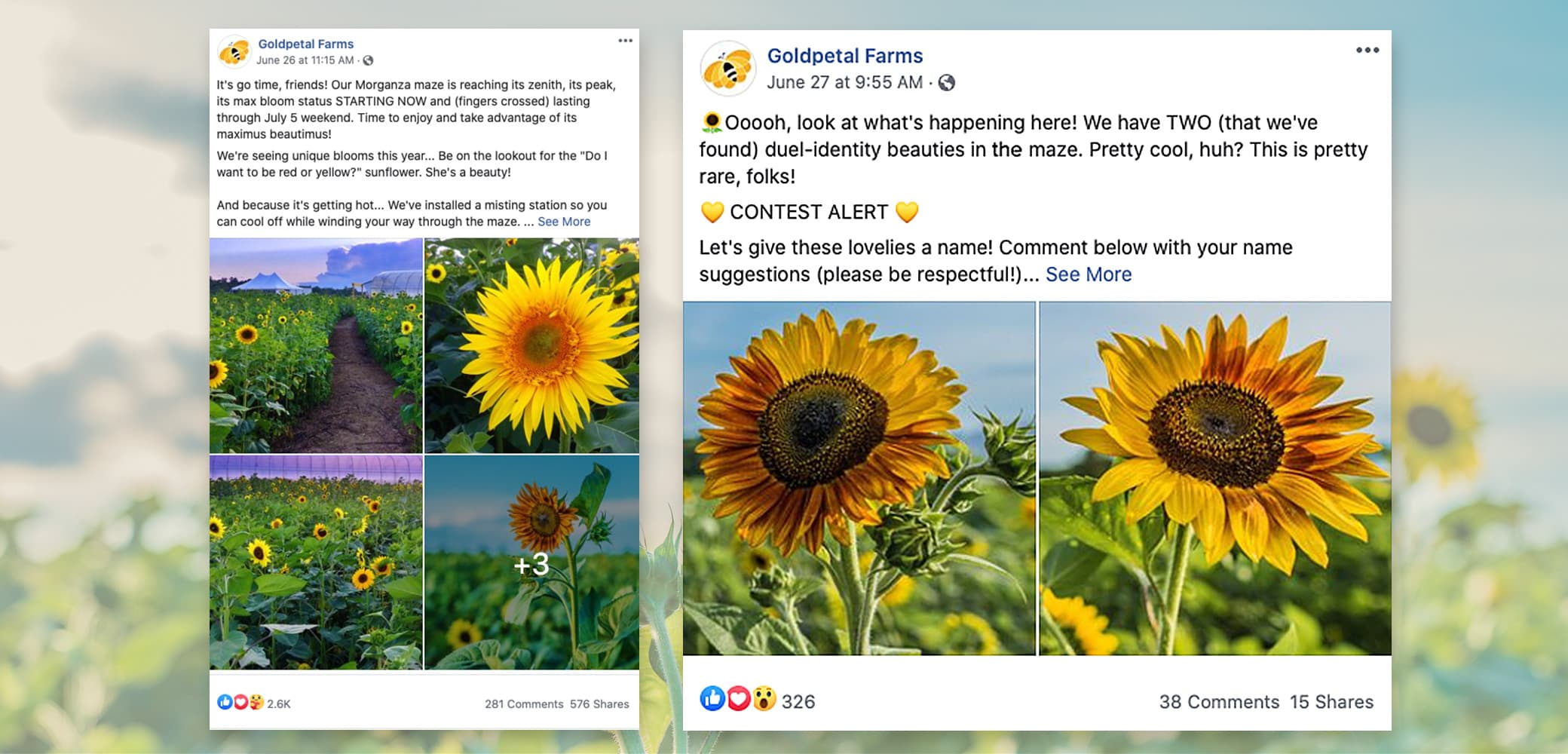 Goldpetal Farms Social Media Management by Red Chalk Studios